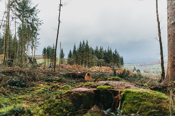 Successful Forestry Innovation Fund to re-open