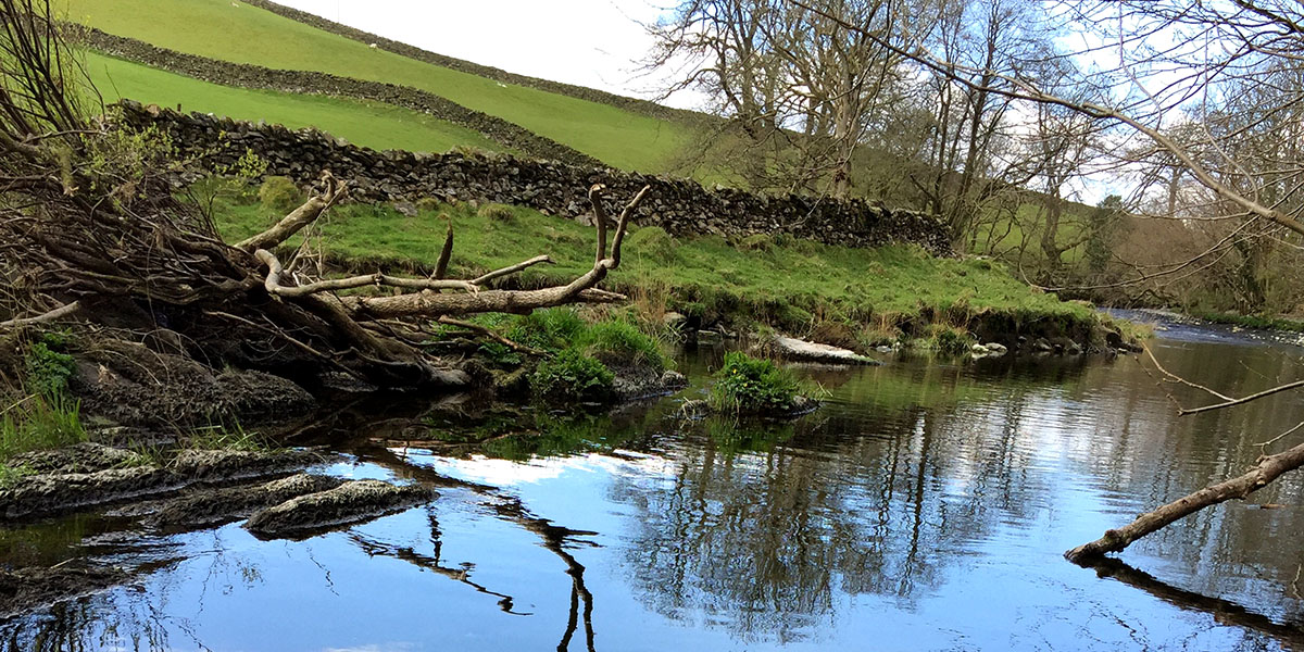 Tree planting and reducing flood risks: Confor calls for greater ambition