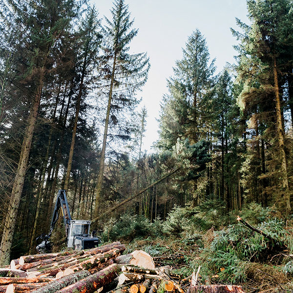 Irving-Timber Felling